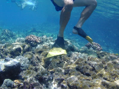 Human Recreational Impacts In Hawaii Marine Protected Areas