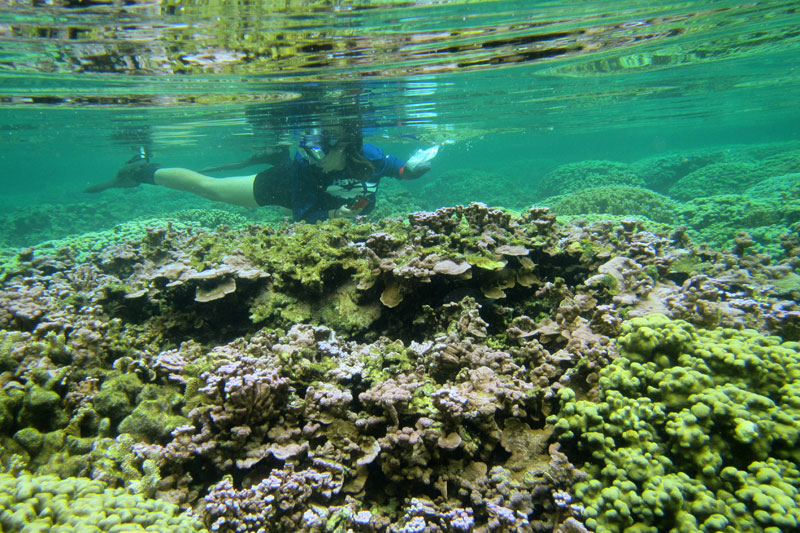 Researcher snorkeling on coral reef