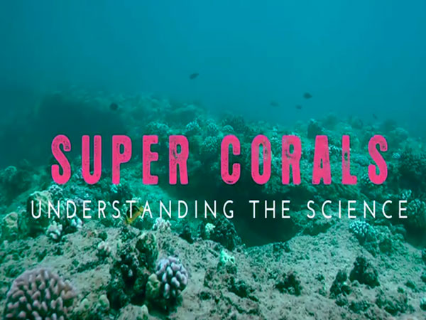 Link to video of Super Corals part 3