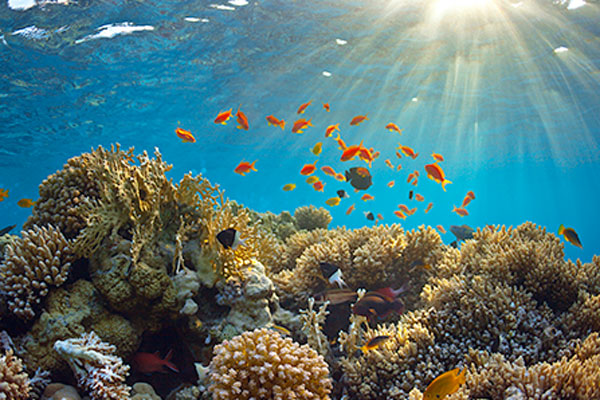 Orange fish on coral reef