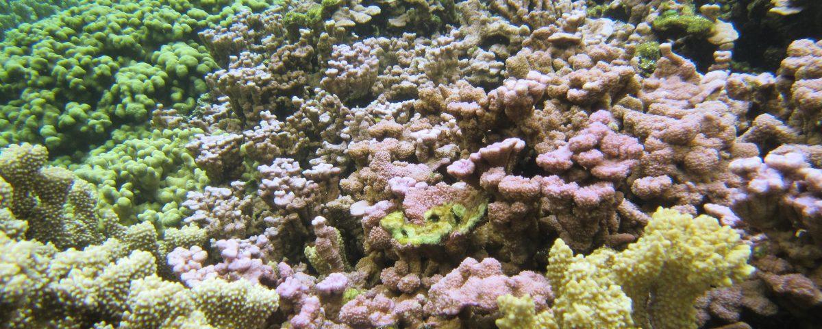 Coral reef in Kāneʻohe Bay